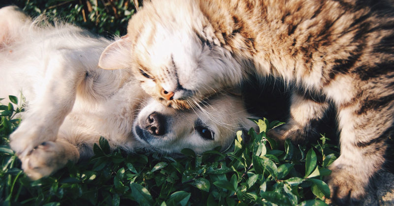 how-to-heal-from-pet-loss