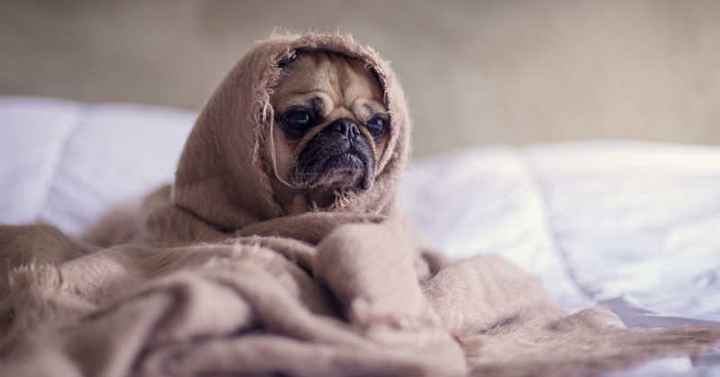 Why-You-Should-Cry-After-Losing-Pet