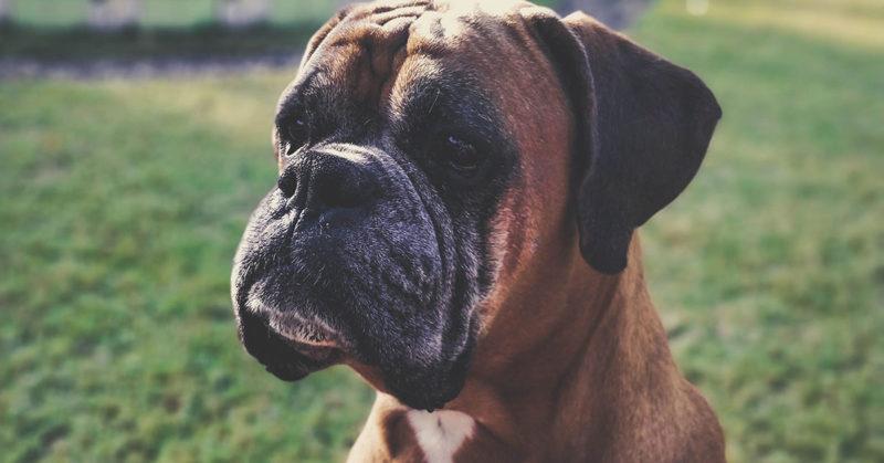 Experts-Pet-Loss