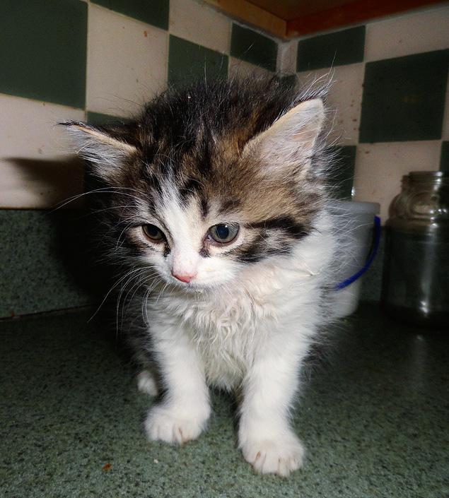 Miracle Kitten Survives Vicious Toss From Third Floor Window