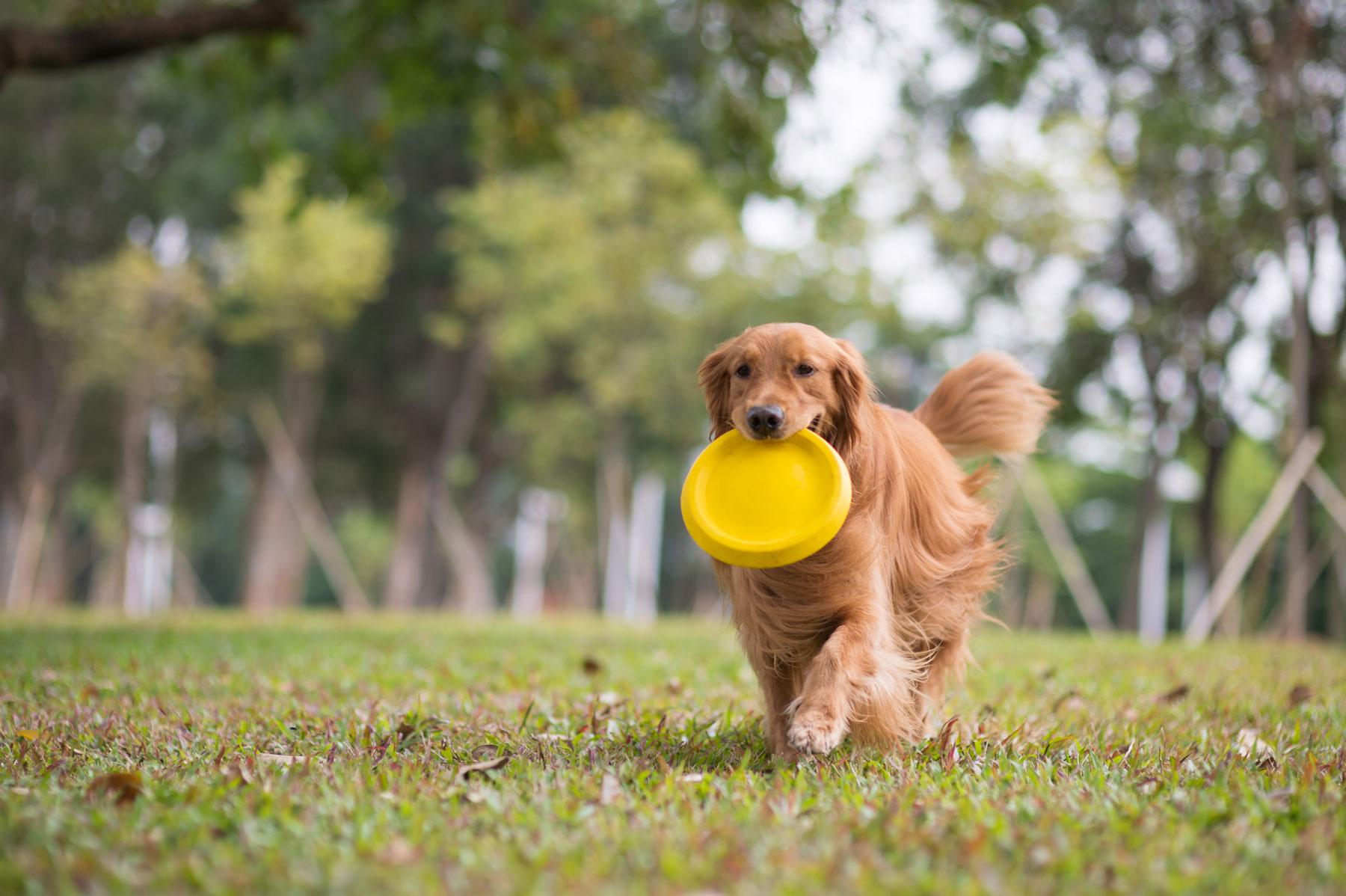 Dog-Urn-feature